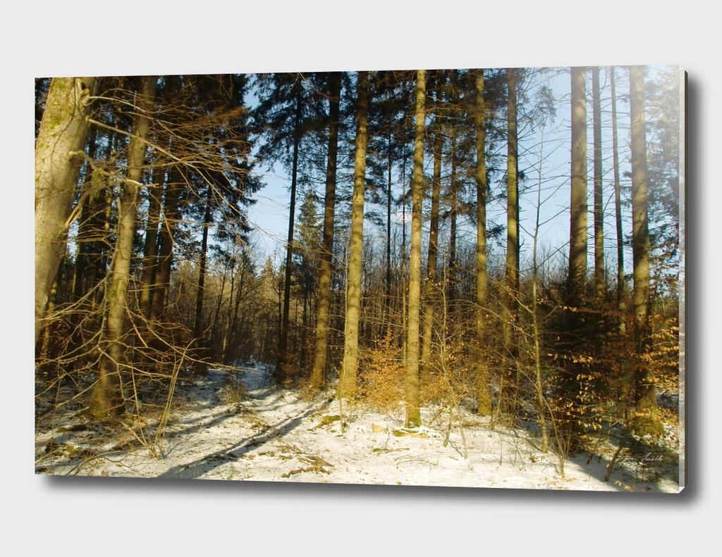 Fürstenried Forest in Bavaria