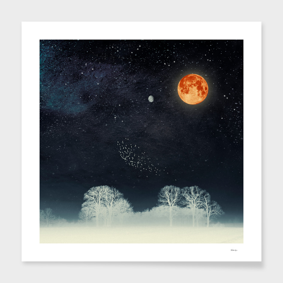 venus & moon night