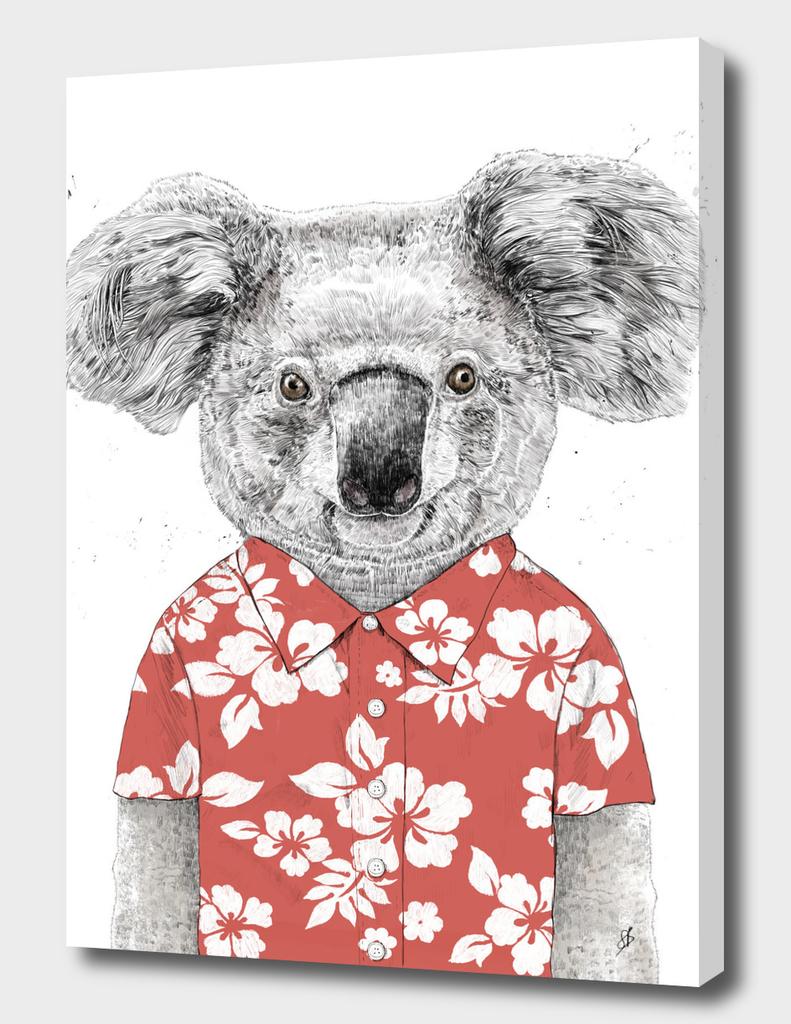 Summer koala