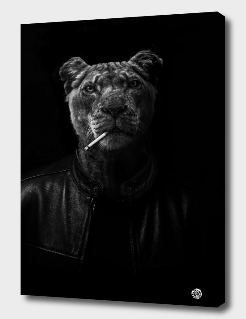 Smoking Cheetah