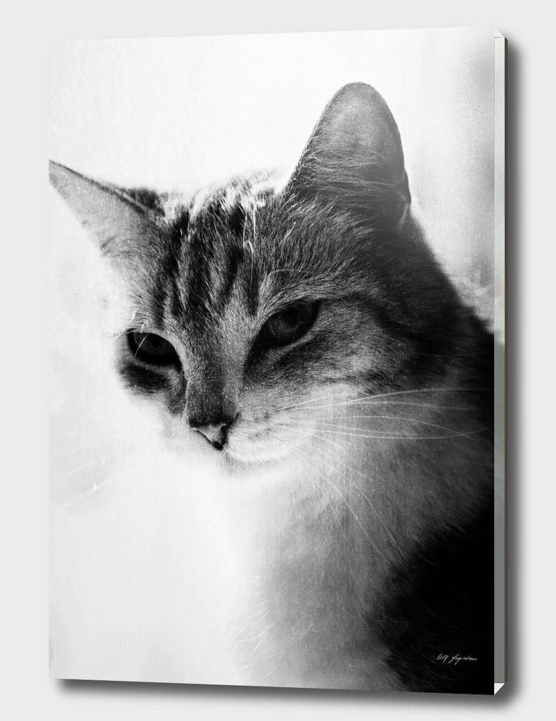 Hampus the cat