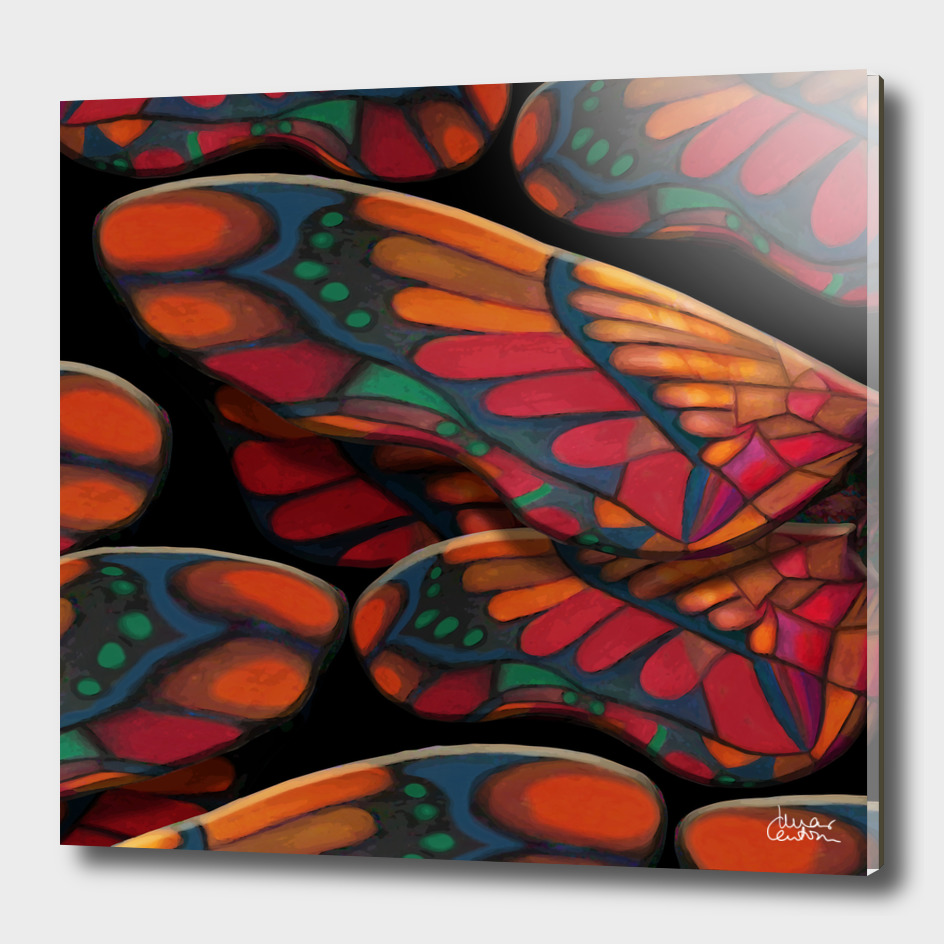 """""""A thousand colors of butterfly wings"""""""