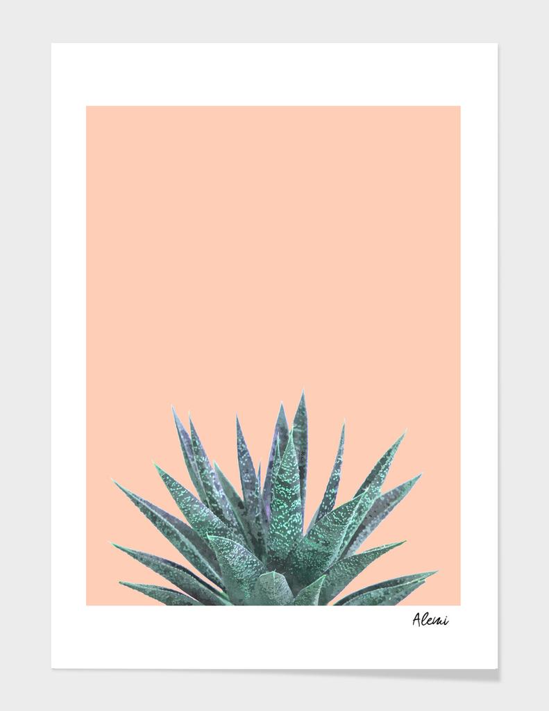 Succulent Illustration