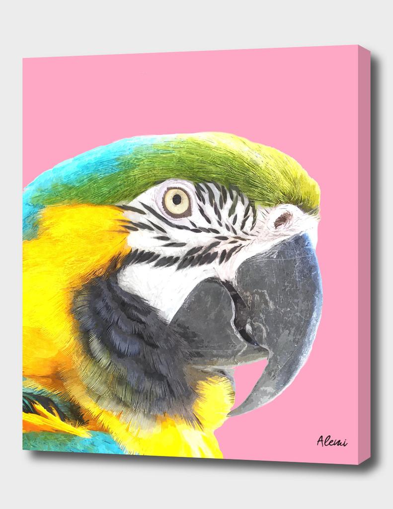 Macaw Portrait Pink Background