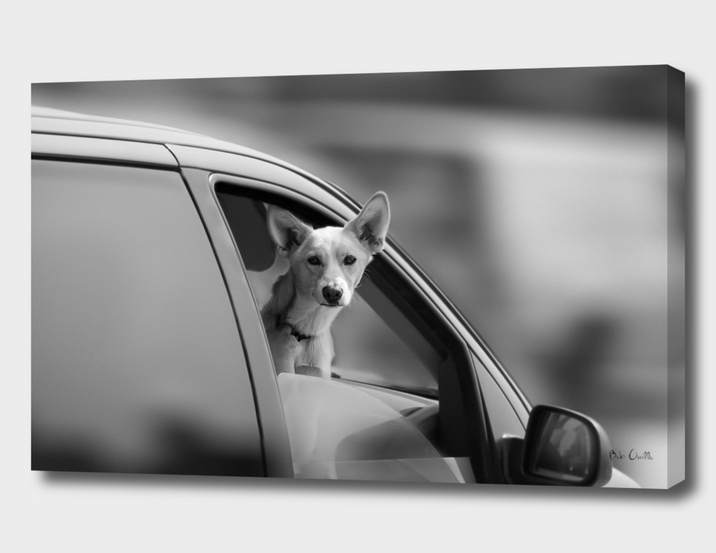 Dog In The Car Window