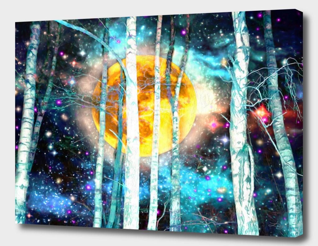 Night Birch Forest
