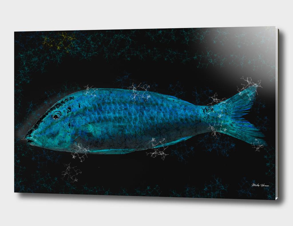 Fish Fine Art