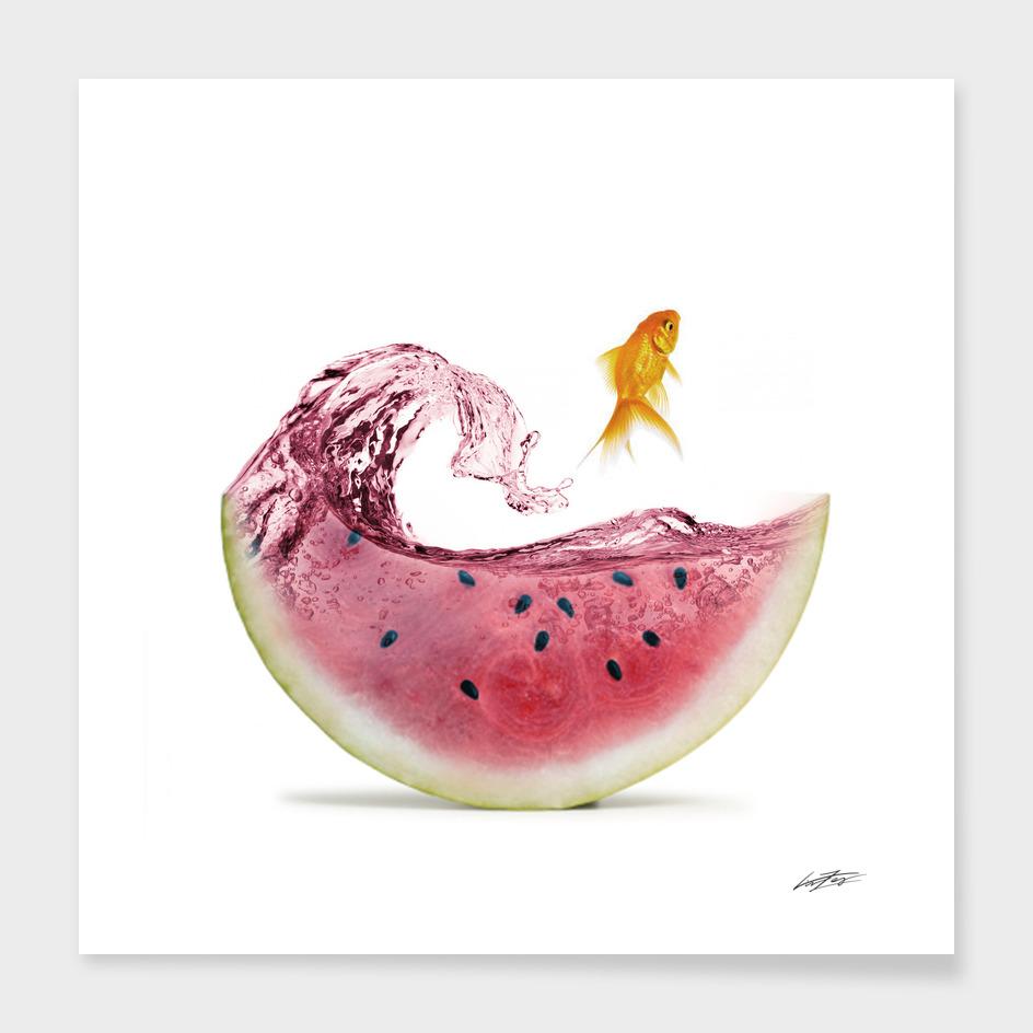 watermelon goldfish II