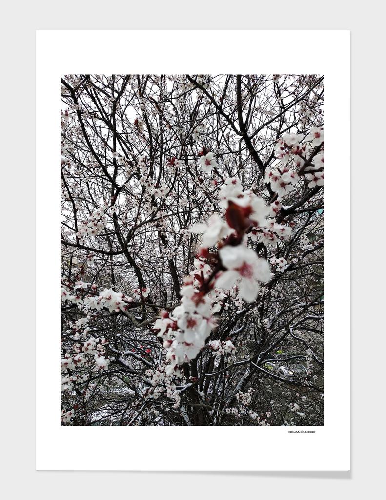 Winter Tale (2)