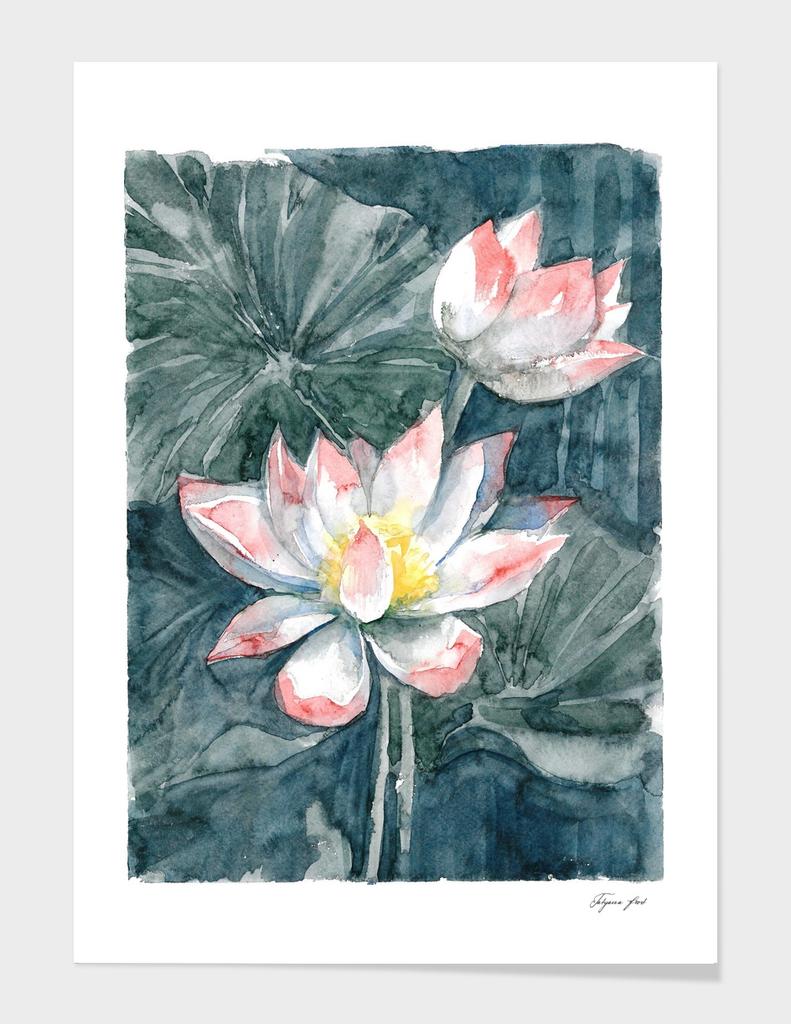 Lotus, watercolor