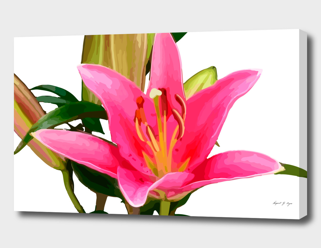 Lilium-Lily flower