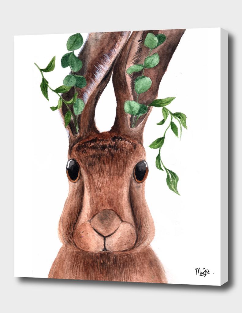 Rabbit and Eucalyptus