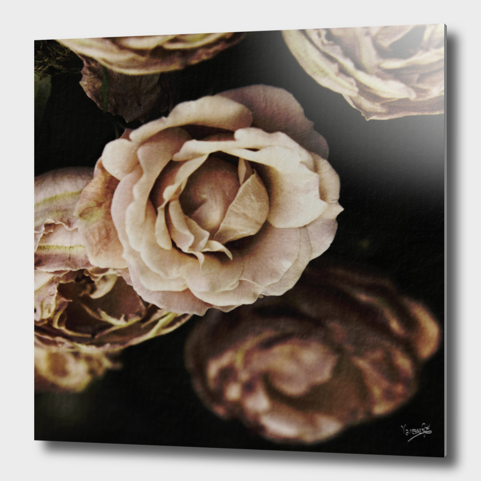 Roses in autumn