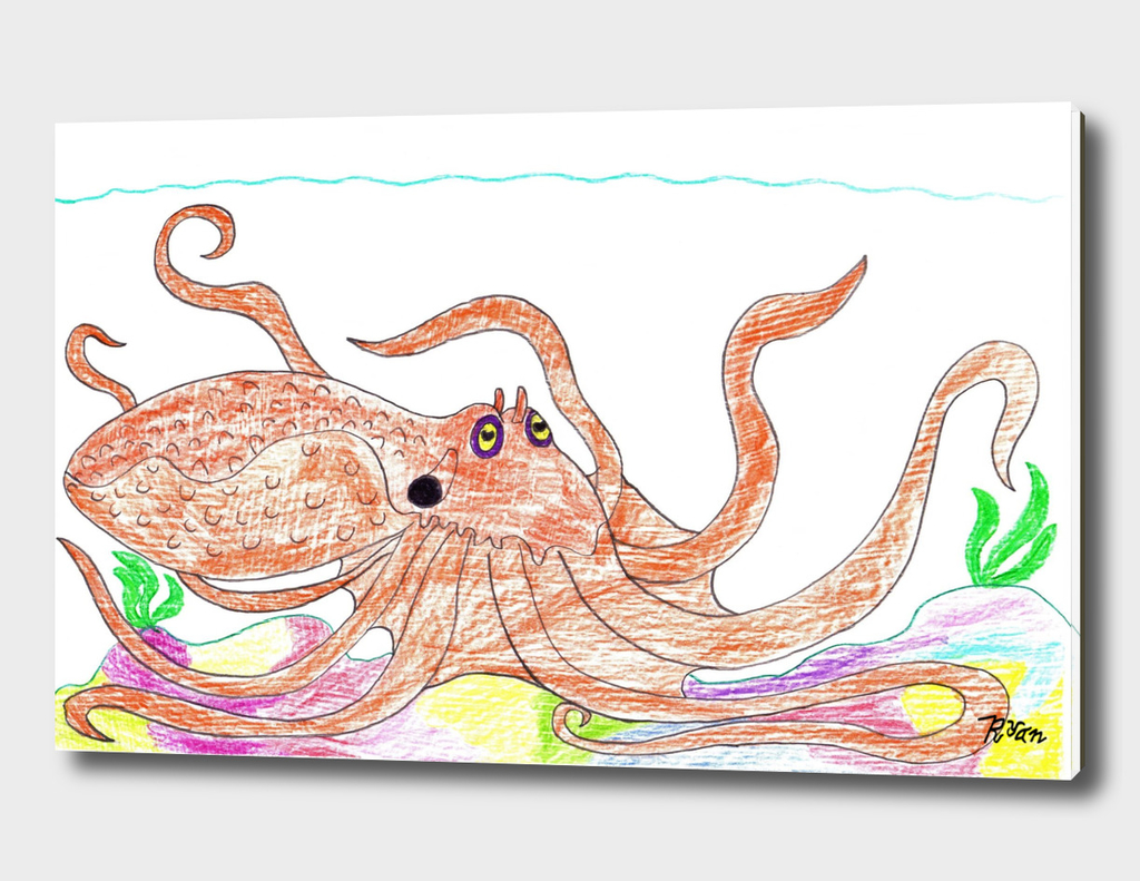 Carribean Reef Octopus