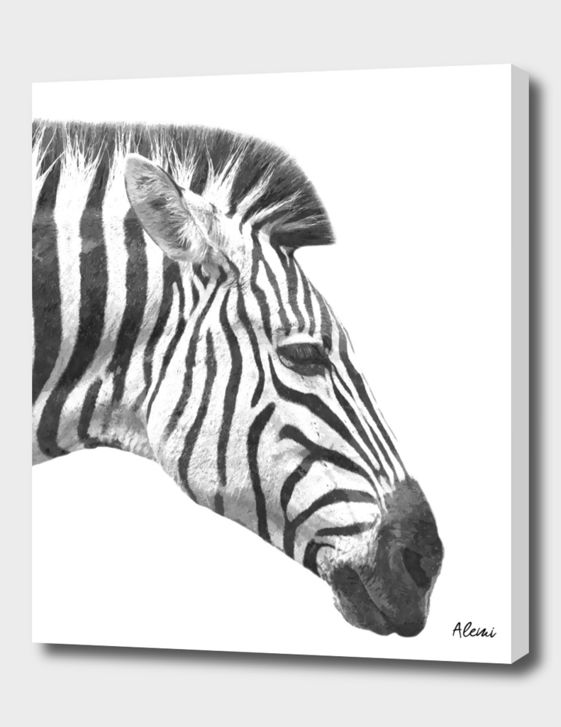 Black and White Zebra Profile