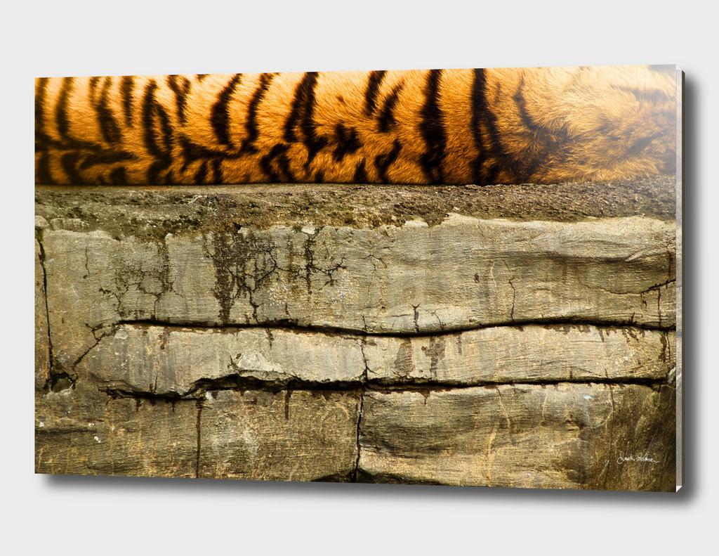 Tiger Abstract