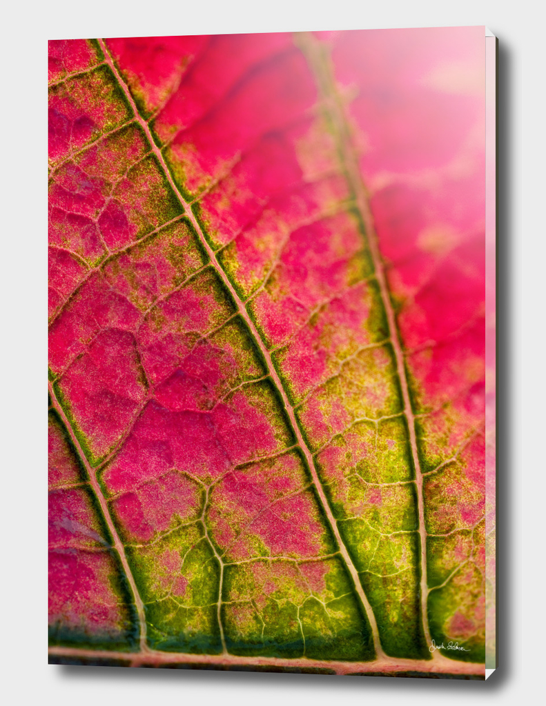 Pink and Green Leaf close-up