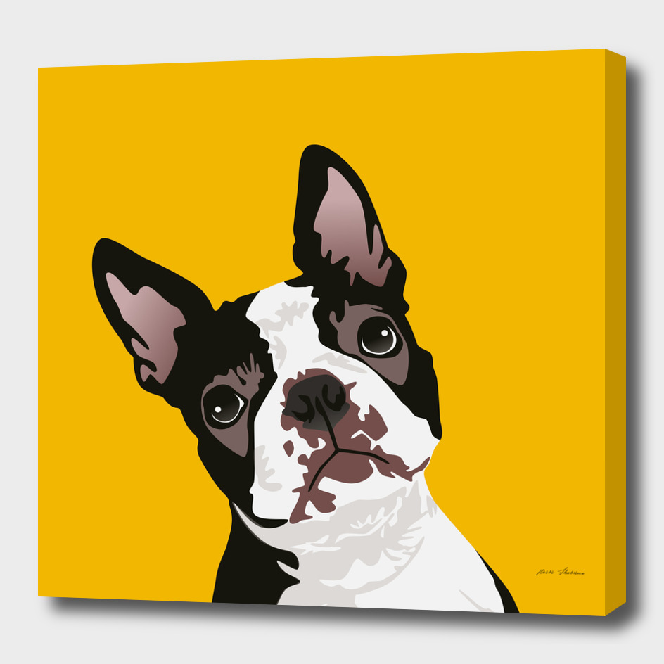 Cute Boston Terrier Dog for Boston Terrier Owner