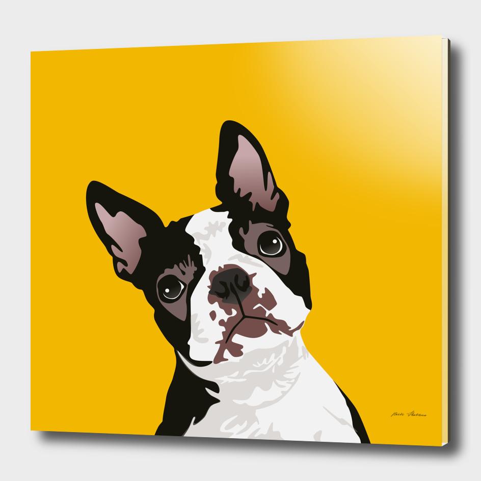 Cute Boston Terrier Dog for Boston Terrier Owner