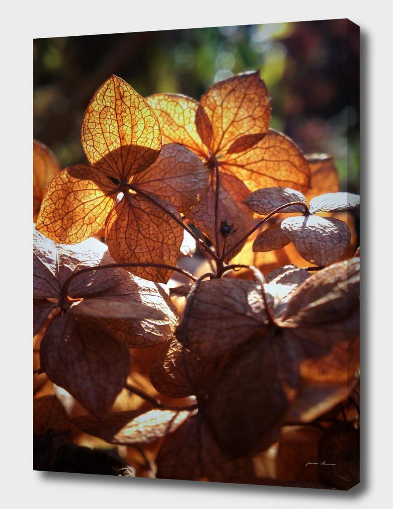 AutumnFlowers