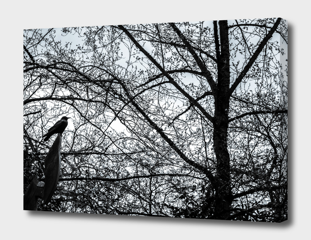 Crow in Abstract Tree Branches 2
