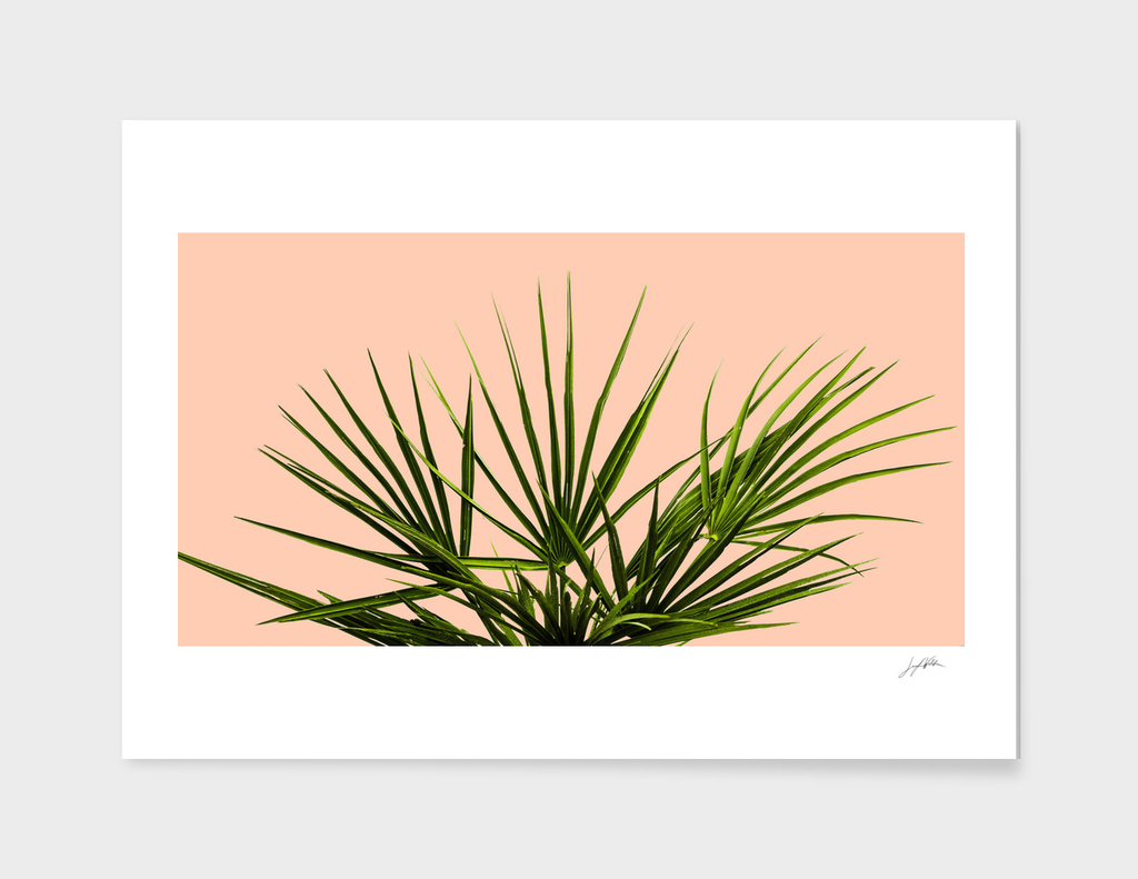 Palm Life - Pastel