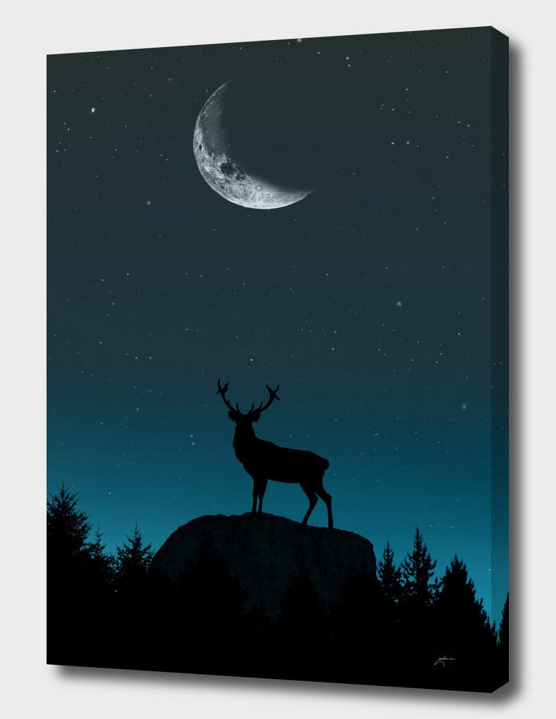 Wild Nature - Nocturnal