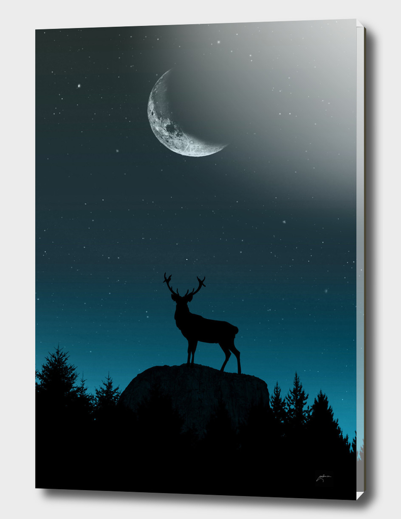 Wild Nature - Nocturnal