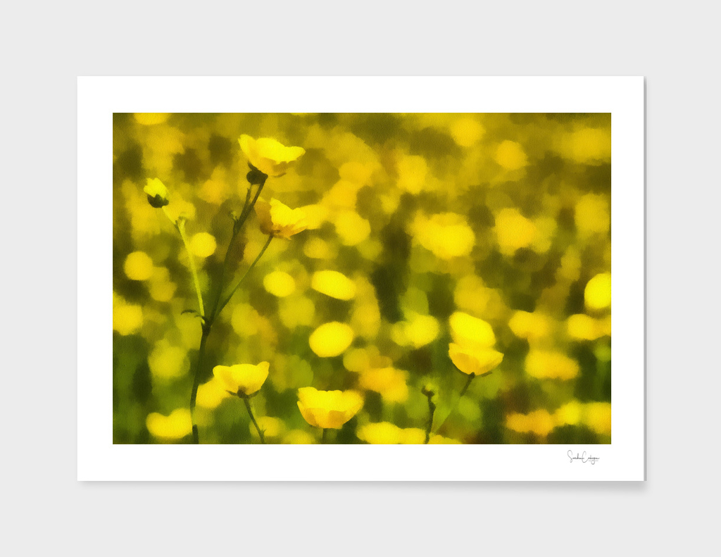 Buttercups and bokeh - Realism