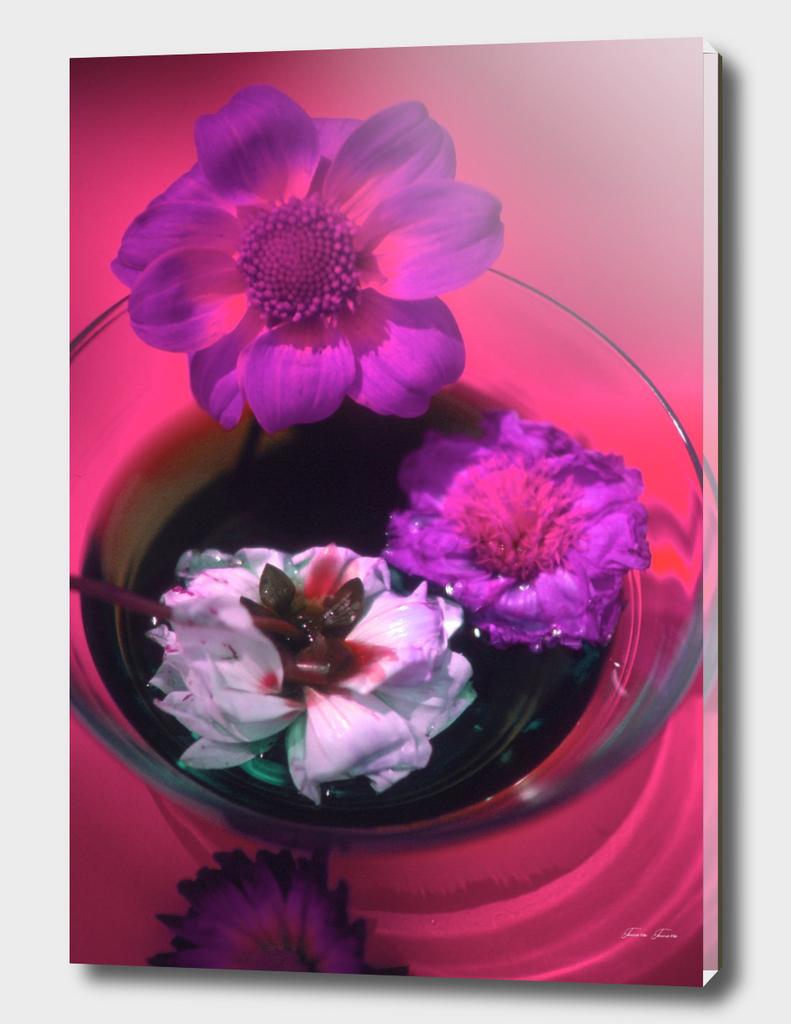 Columbus Fleurs Magenta