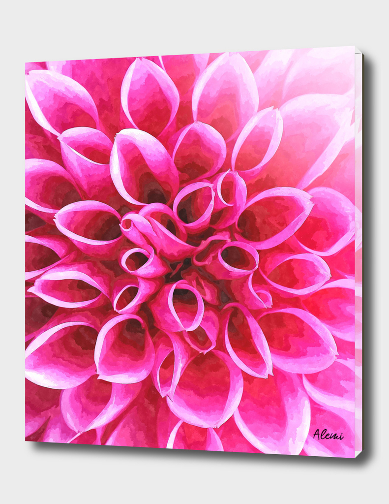 Dahlia Macro Illustration