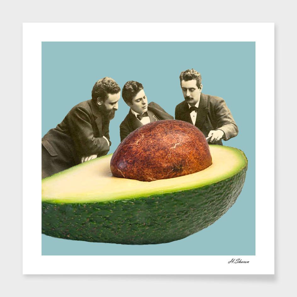 Avocado Discussion