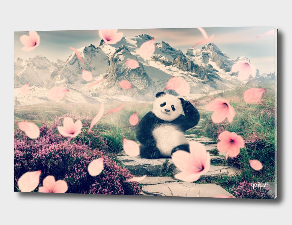 Baby Panda by GEN Z