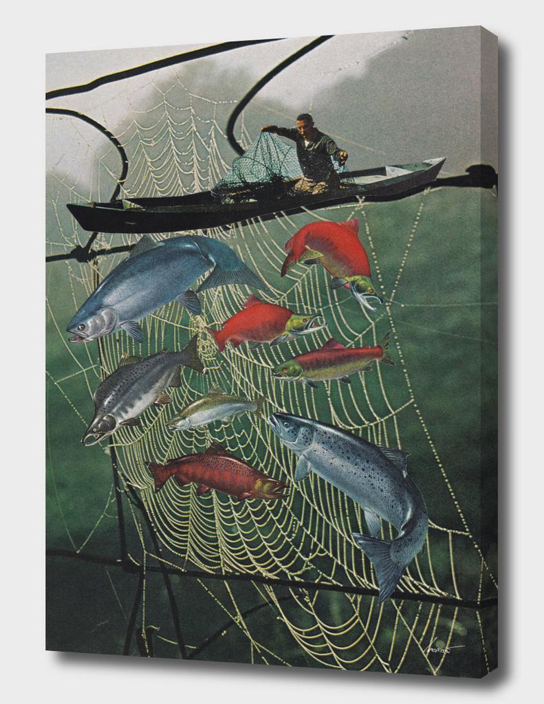 Salmon Trap