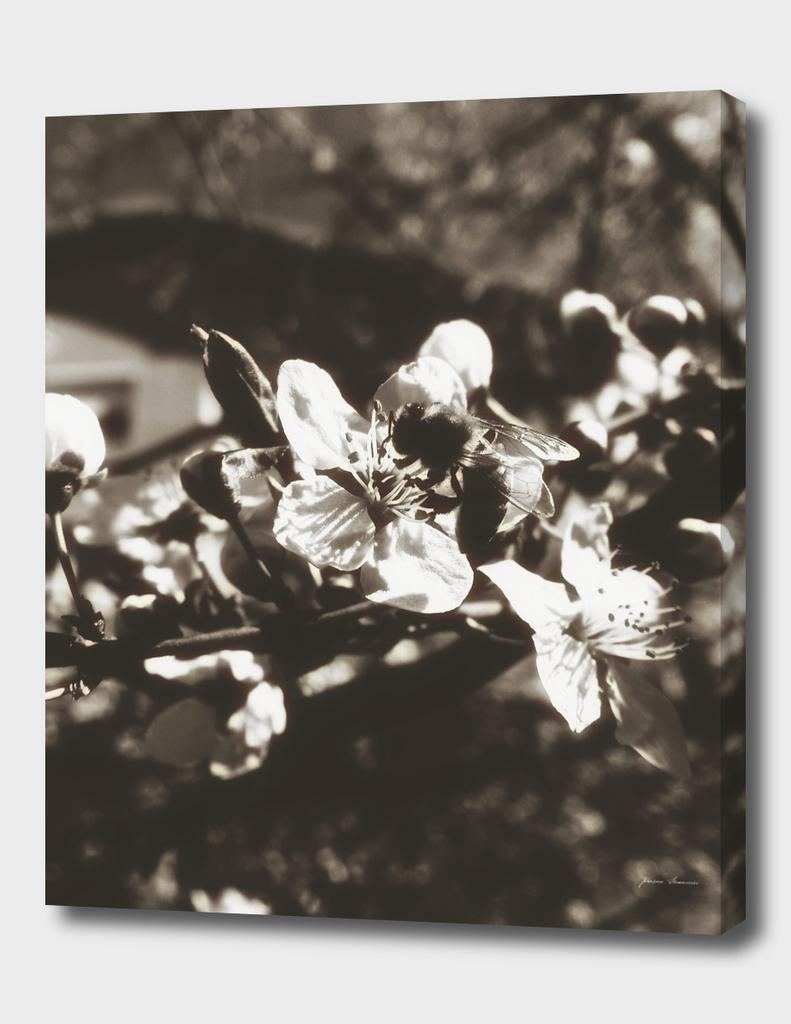 SpringNoir