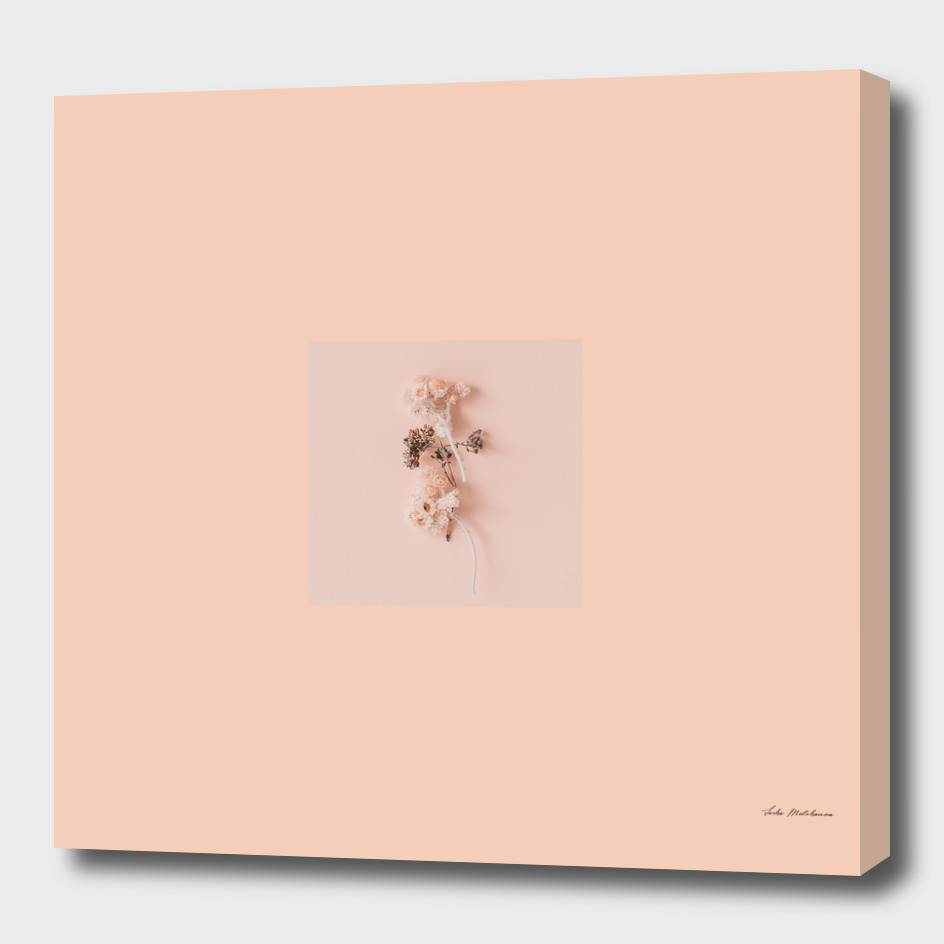 Peach color flowers