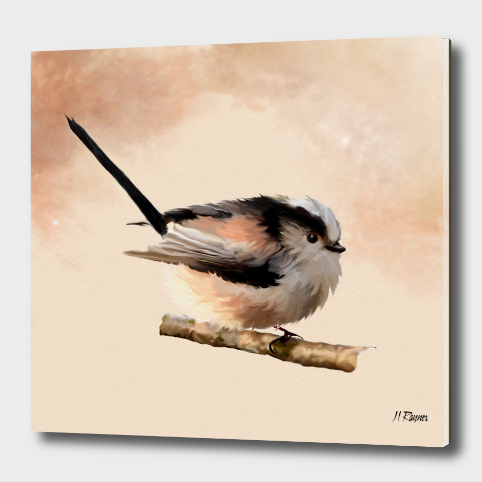 Bird: Long Tailed Tit