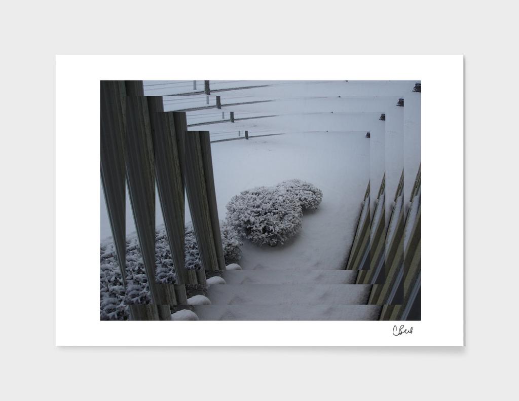 5 Views of Snow