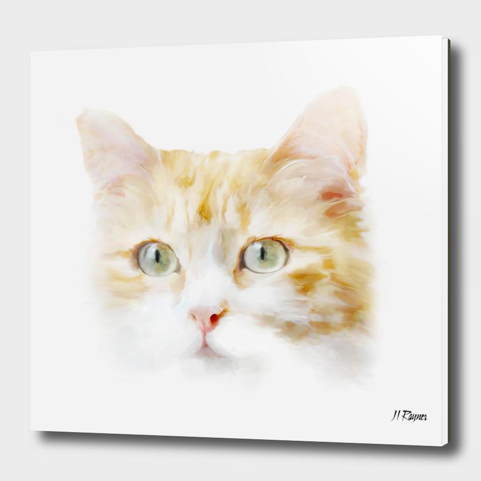 Cat: Roger- Ginger Tabby