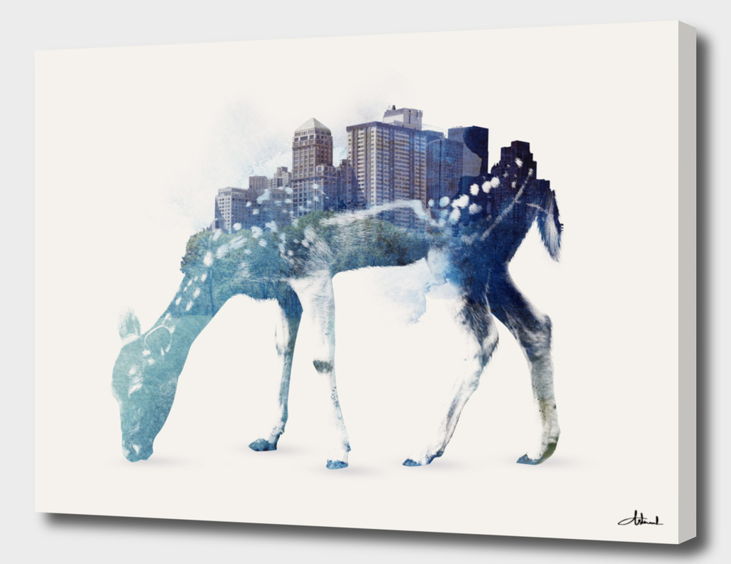 City deer