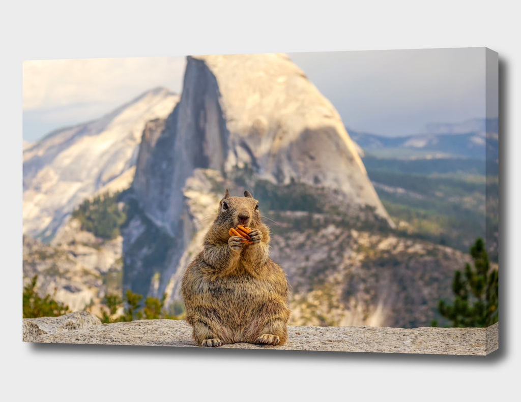 A Squirrel and Half Dome