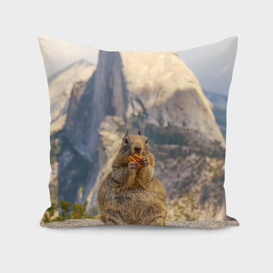 A Squirrel and Half Dome