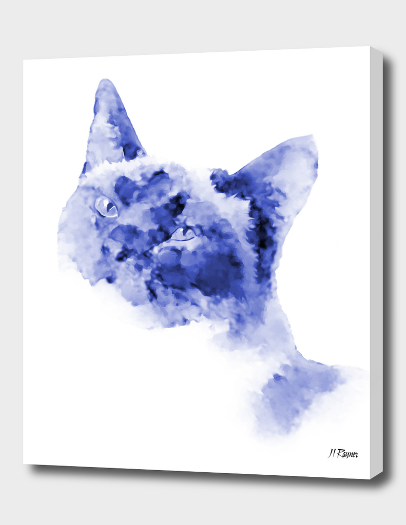 Cat: Dresden Blue