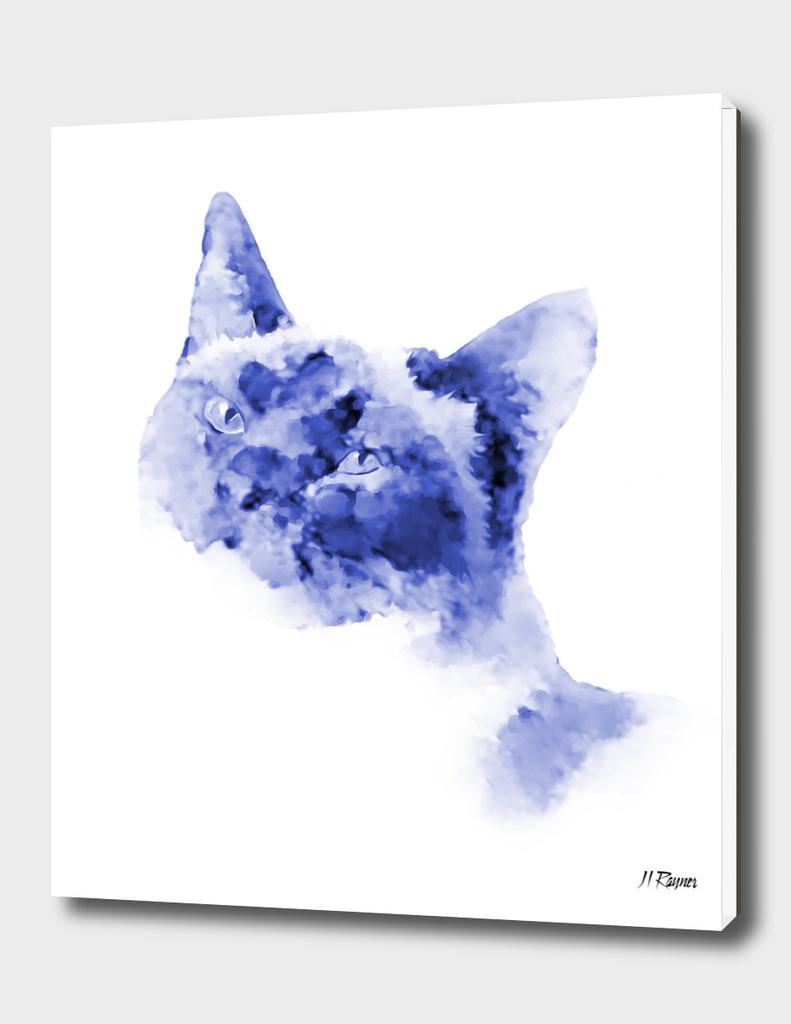Cat: Dresden Blue