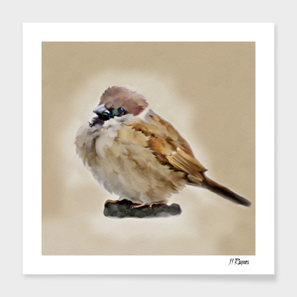 Bird: Young House  Sparrow