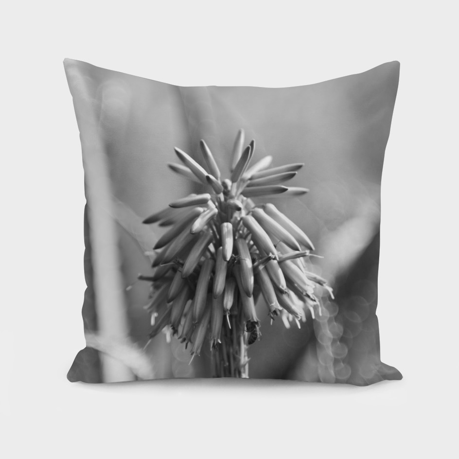 Aloe Flower in B&W