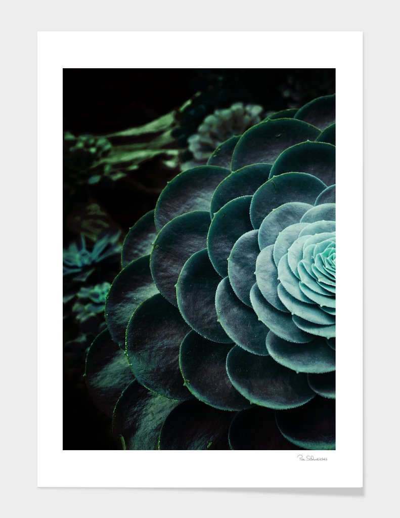 DARKSIDE OF SUCCULENTS V-2