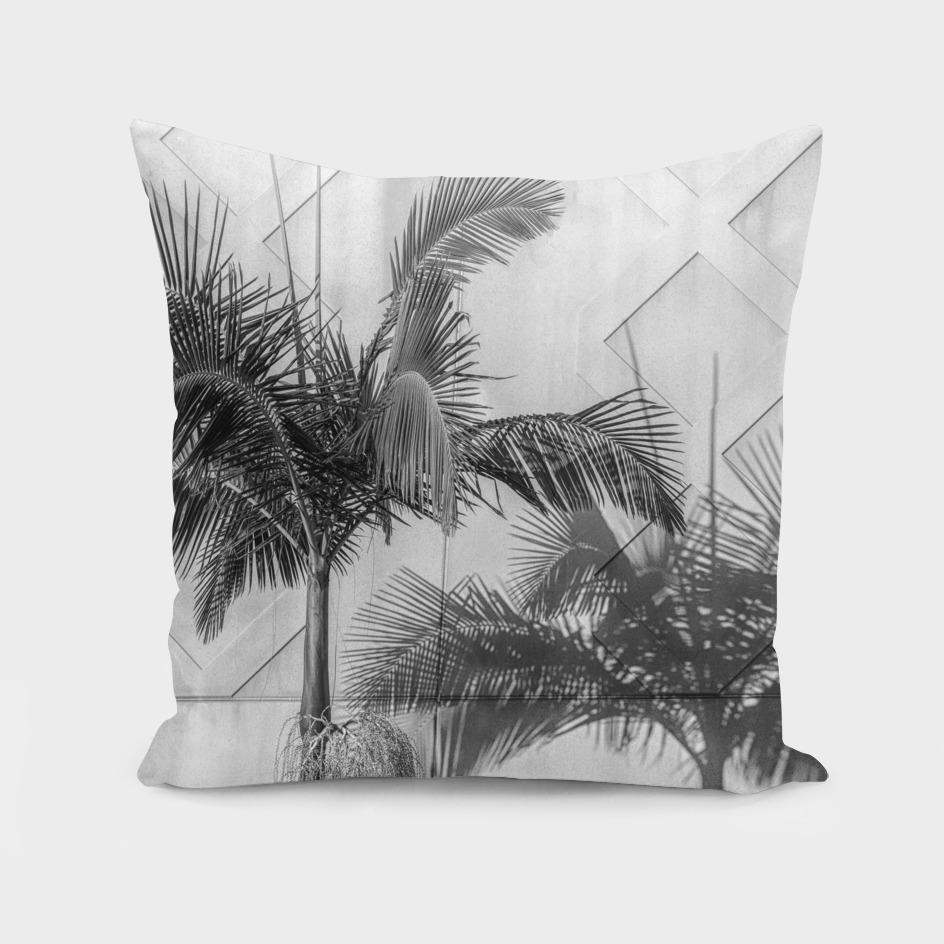 Urban Palm