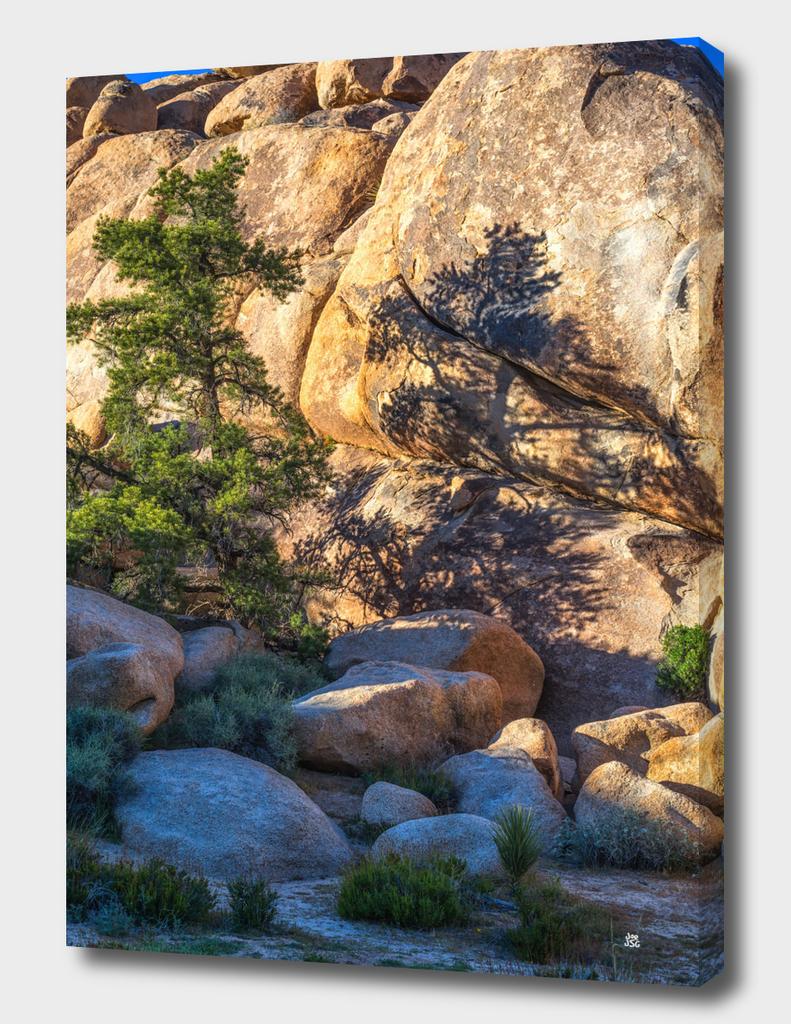 Pretty Pine