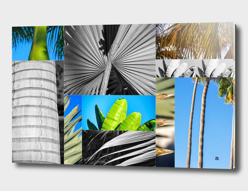 Palm Tree Parts